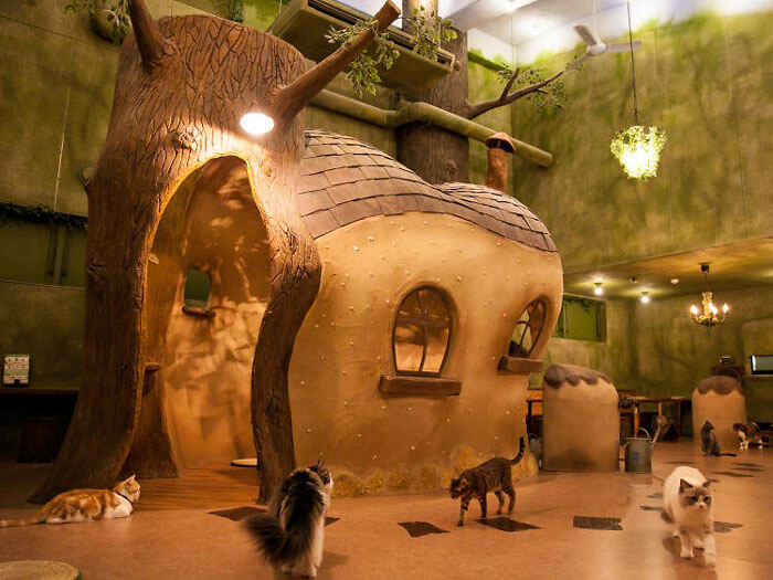 9- cá koi thú cưng 3 - 10 mẫu & ý tưởng thiết kế quán cafe nhỏ giá rẻ đẹp nhất 2019