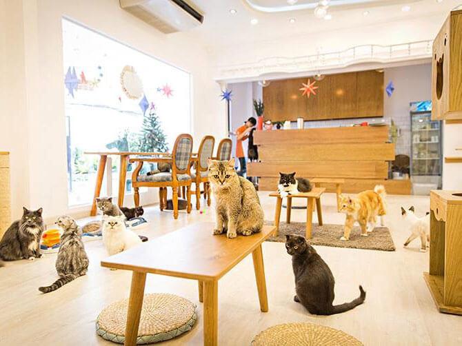 9- cá koi thú cưng 4 - 10 mẫu & ý tưởng thiết kế quán cafe nhỏ giá rẻ đẹp nhất 2019
