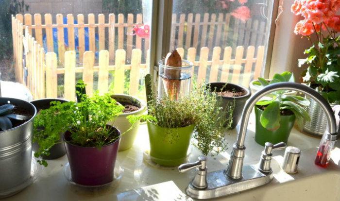 1- Phòng bếp nên đặt cây gì theo phong thủy để thu hút tài lộc